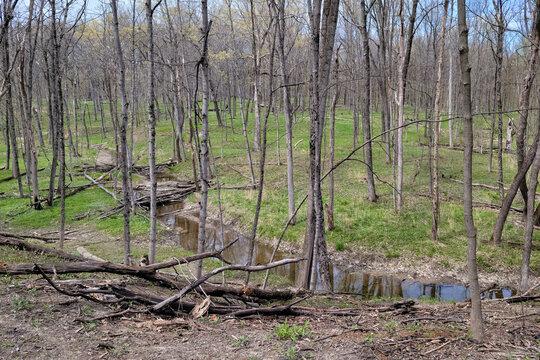 Barren trees with creek in a suburban forest preserve