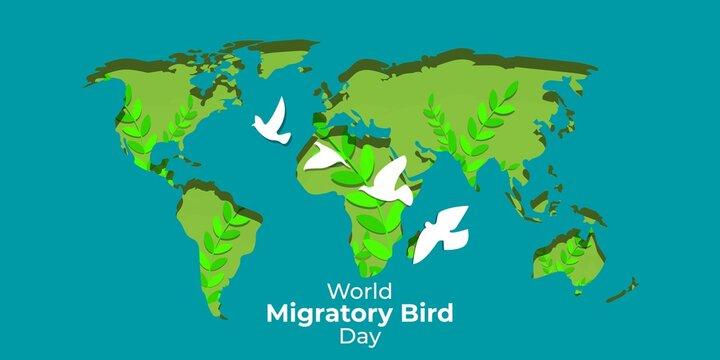 Vector illustration of World Migratory Bird Day, 8 May.