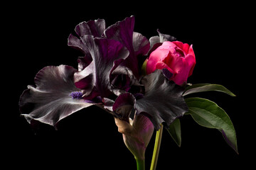 Peony flowers and iris flowers on a black background. Composition, isolated.