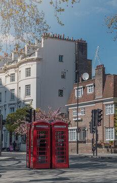 Rincón con encanto en una calle de Londres. Cuatro antiguas cabinas de teléfono rojas frente a un bonito árbol de cerezo rosa y un edificio blanco durante un soleado día