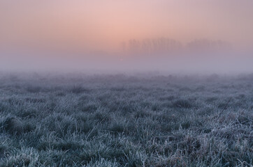 Fototapeta MISTY SUNRISE - A picturesque morning over the meadows