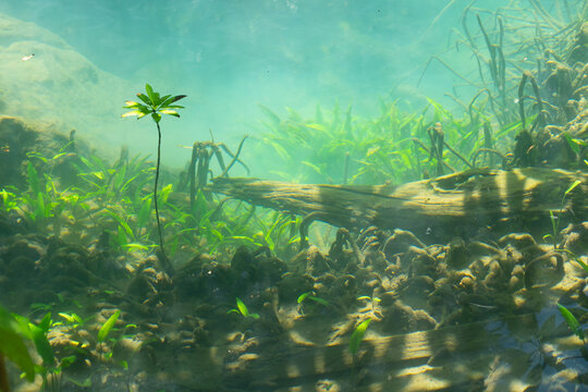 Marine reserve canal, emerald crystal clear lake water surface in National Park with forest trees resource environment, Tha Pom Klong Song Nam, Krabi. Nature landscape. Travel. Underwater in river.