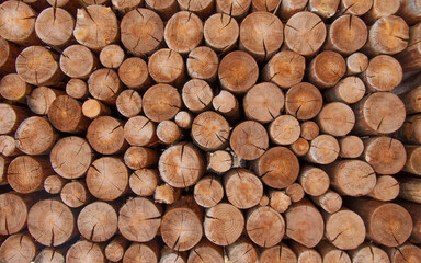 pile of naturial log round teak wood tree stump texture background pattern use for interior wall decoration