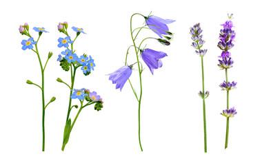 set of wild flowers isolated on white background