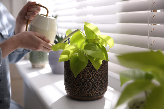 Woman watering beautiful potted plant on window sill, closeup. Floral house decor