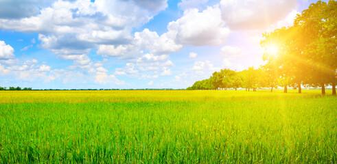 Fototapeta Green field, sunrise and blue sky. Wide photo.
