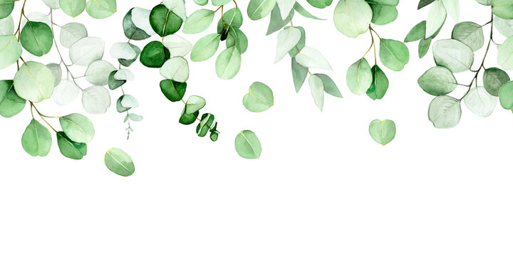 seamless border of leaves and branches of eucalyptus painted in watercolor. green eucalyptus leaves, tropical plant isolated on white background. web banner, frame, border. decoration for postcards