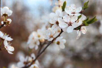 Sezon wiosenny