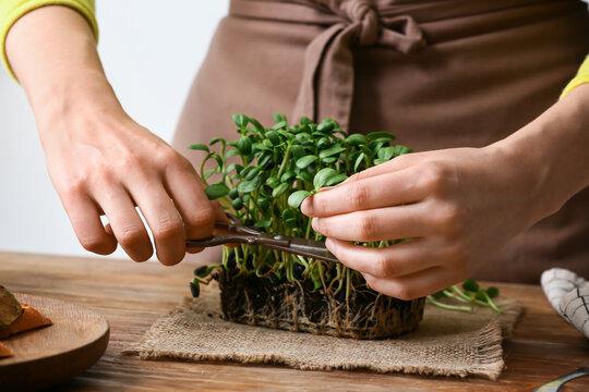 Woman cutting fresh micro green on table
