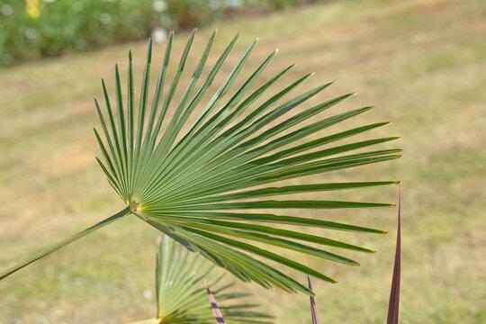 palm green leaf on grass background