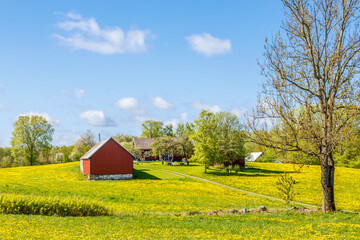 Farm in the rural landscape in spring