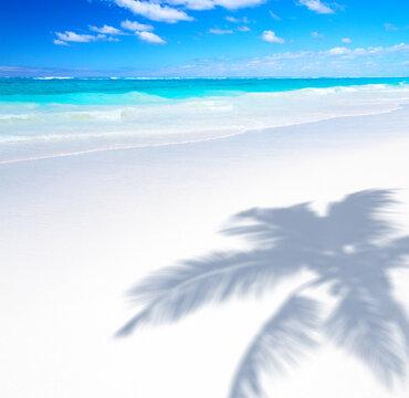 Art Beautiful sunny tropical sandy beach background; palm trees shadow and blue sea waves