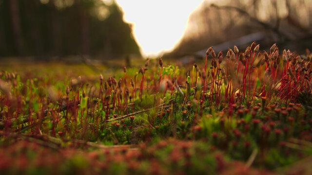forest litter