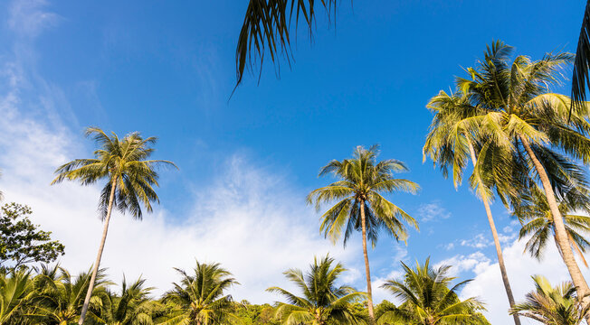 Banner of Summer tropical with blue sky and Palm trees against blue sky, Palm trees at tropical coast background
