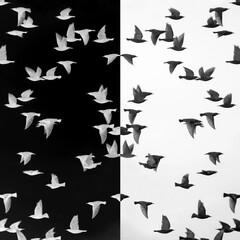 Gespiegelter Vogelschwarm Stare in negativ und positiv Entwicklung