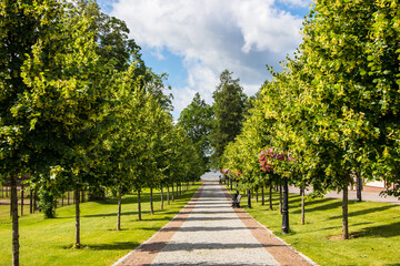 Tilia cordata small-leaved linden tree alley leading to lake Tamula in city of Võru, Estonia ( Europe) in summer of 2019.