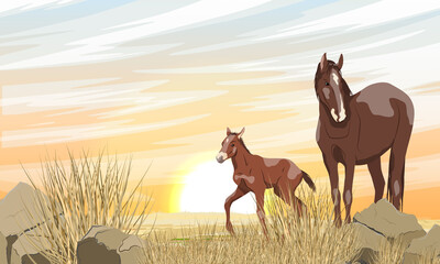 Fototapeta A brown horse with a white spot and its foal are walking along a desert rocky area with stones and dry grass. Sunset in the steppe. Equus ferus caballus. Realistic vector landscape.