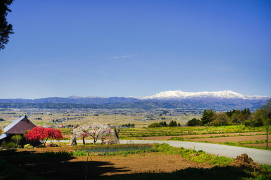 喜多方市恋人坂・紅白の桜と残雪の飯豊連峰
