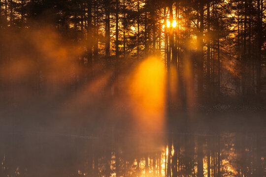 Sunbeams shining through the forest at sunrise