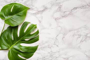 Fototapeta monstera leaf tropical plant on marble background
