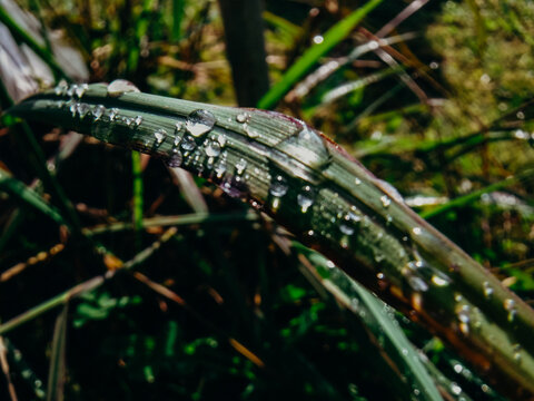 Closeup piece of green grass with fresh dew drops