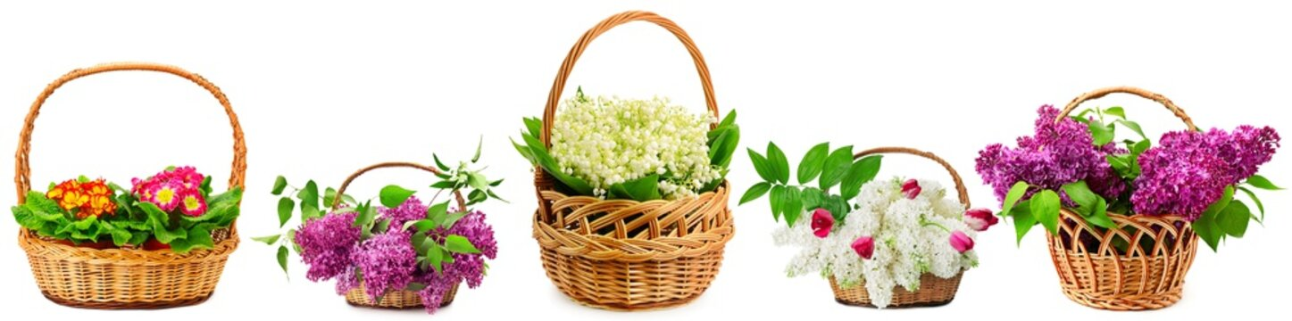 Wide background from beautiful fresh violets, snowdrops, lilacs in large baskets isolated on whit