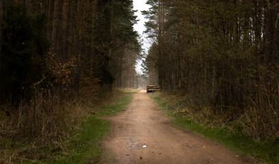 Droga prowadząca przez las sosnowy. W oddali skład drewna.