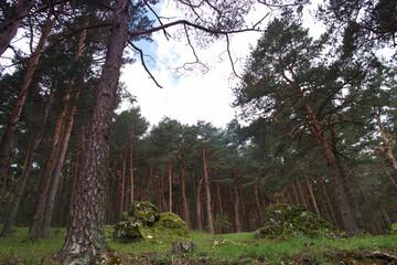 las góry rośliny drzewa trawa widok - fototapety na wymiar
