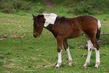 koń zwierze na zewnątrz trawa rośliny - fototapety na wymiar