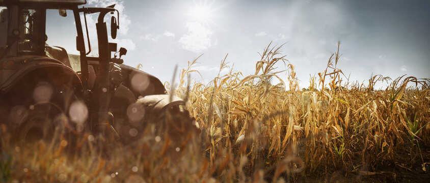 Traktor steht auf einem vertrockneten Feld