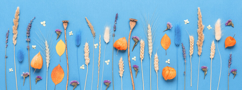 Flower composition. Dried flowers, grass, ears and leaves on a blue paper background. Beautiful floral banner.