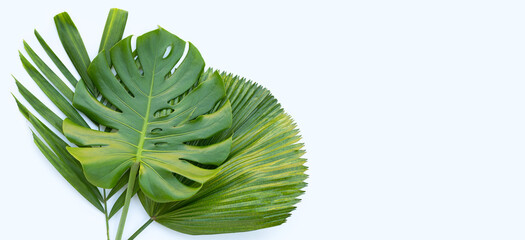 Tropical palm leaves with monstera plant leaf on white