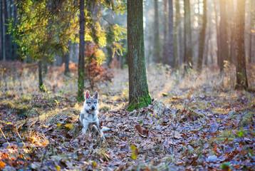 Piękny pies na tle natury