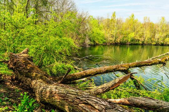 Ufer am Sieglarer See
