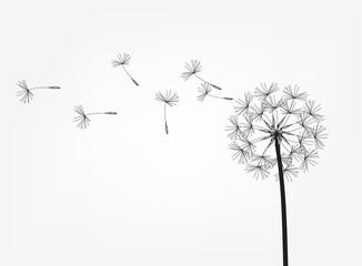 Obraz Abstract background of a dandelion for design. - fototapety do salonu