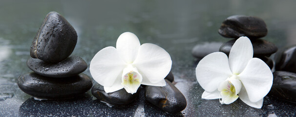 White orchid flowers and stone with water drops isolated