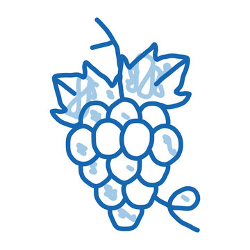 bunch of grapes doodle icon hand drawn illustration