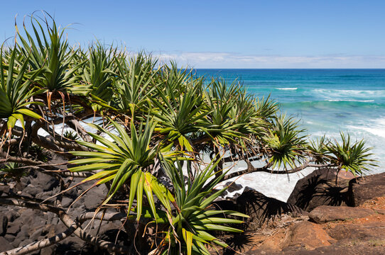 Looking past Pandanus plants and rocks down to tropical blue water and gentle waves