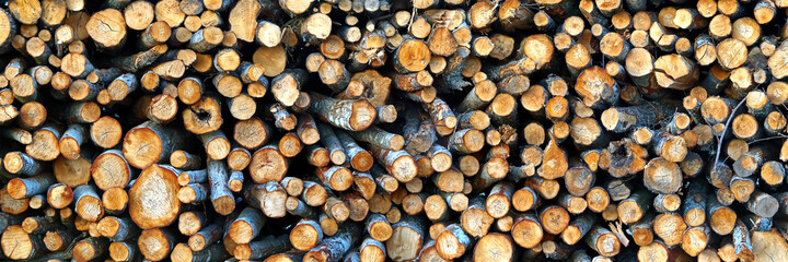 Wall Murals Firewood texture Logging industry. cut trees are stacked. logs before sawing into boards. tree cut panorama, banner