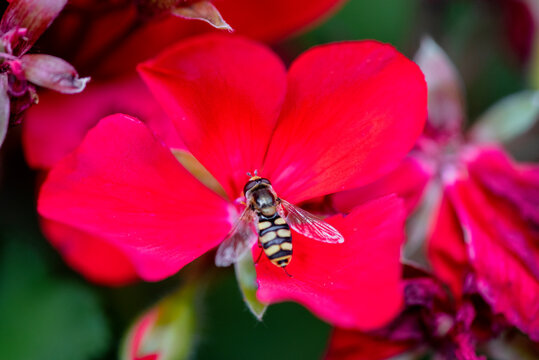 A bug on red flower