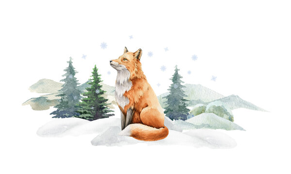 Fox animal in winter landscape. Watercolor illustration. Wild cute red fox in winter forest. Festive image print. Furry animal with red fur on white snow and fir trees. Side view forest animal