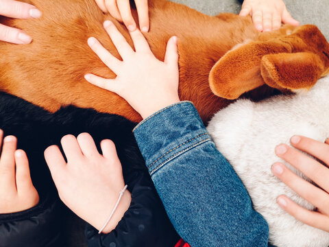 Des mains d'enfants caressant un lapin. Des lapins sous les caresses de mains. La douceur des animaux pour les enfants. Les animaux et les enfants. Des enfants jouent avec un lapin