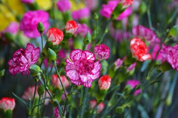 Fototapeta Bukiet pięknych kwiatów różnokolorowych na straganie.  obraz