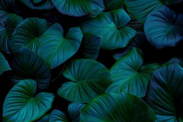 Fototapeta blue and green leaves background obraz