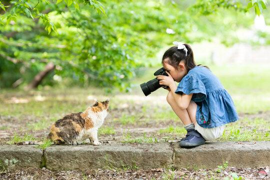 一眼レフカメラで猫の写真を撮る少女