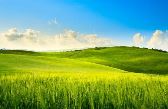 art springtime rural landscape. Springfield and blue sky panorama