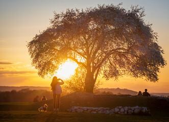 Fototapeta Famous tree in Krakow on Krakus Mound during sunset. obraz