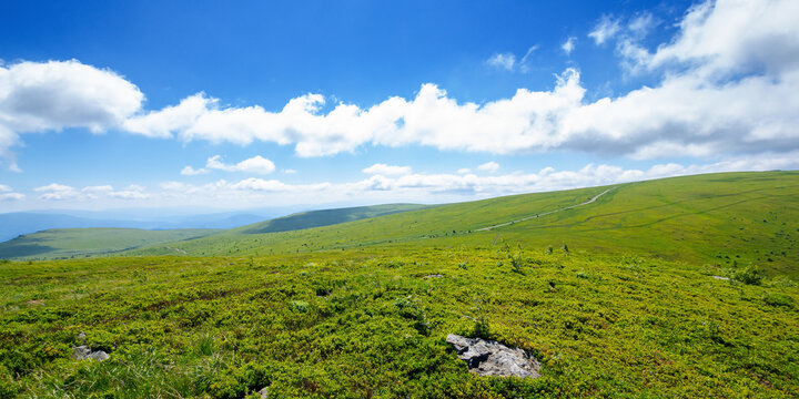 meadow on the mountain plateau. beautiful summer landscape on a sunny day. clouds on the sky above the distant ridge