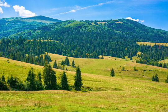rural fields in mountainous countryside. trees on the grassy hills. summer landscape on a bright sunny day