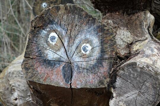 Auf einen Baumstamm gemaltes Bild einer Eule
